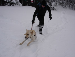 04506_enthusiastic_dog