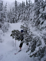04512_plam_peeking_behind_tree