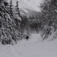 04519_plam_spray