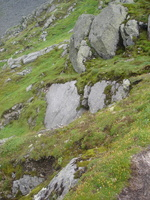 08655_alpine_meadow