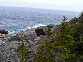 00610_rocks_trees_and_ocean