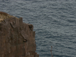 00636_gulls_and_cliff