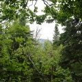 06482_forest