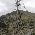 Dead tree, plus mountain