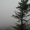 9129_one_tree_and_fog