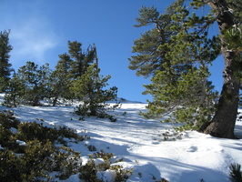 1195_snow_and_trees