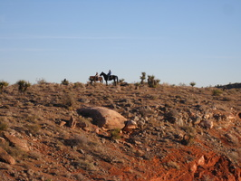 Horses at Calico Basin