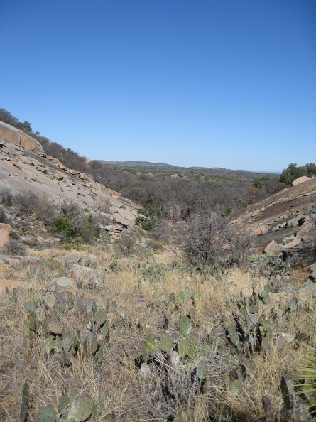 1621_cactus_in_the_valley