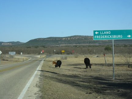1648_cows_and_llano_vs_fredericksburg