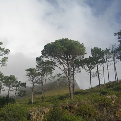 Descent from Table Mountain, May 10