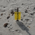 00531 warning sea turtle nest