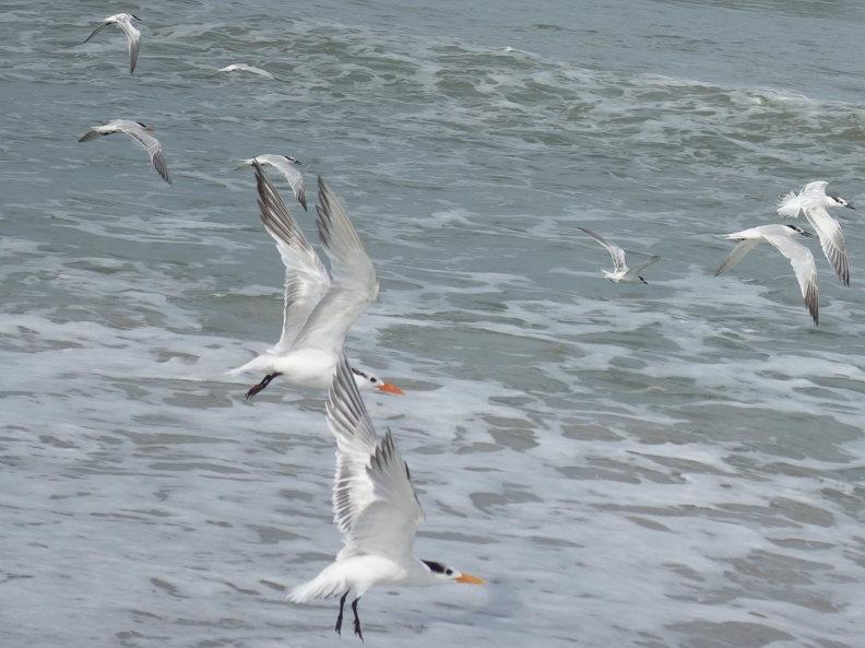00540_flying_seagulls.JPG