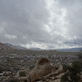 09773_joshua_trees_and_topography.JPG