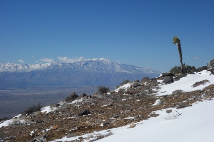 09909 jtree with mt san jacinto