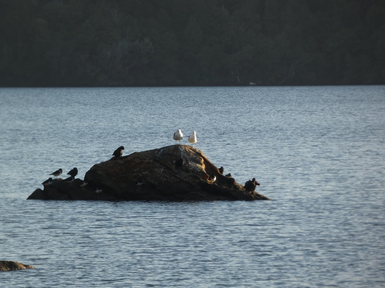 50056_birds_on_a_rock.JPG