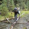 2998_plam_stream_crossing_on_log