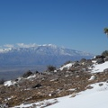 09909_jtree_with_mt_san_jacinto.JPG